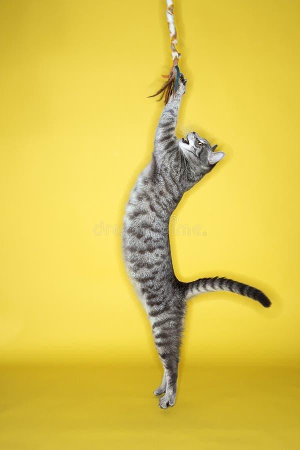 Gato que juega con el azulejo.