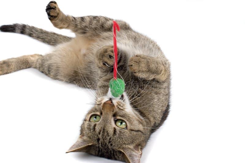 Gato que juega con el juguete del ratón imagen de archivo libre de regalías