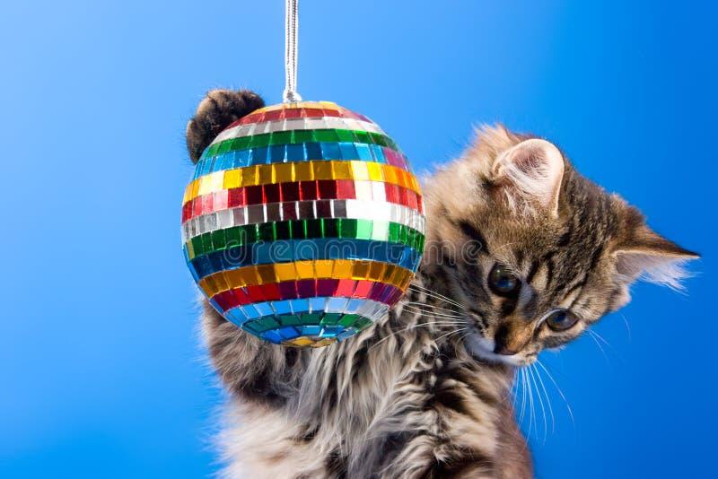 Gato que juega con la bola del disco fotografía de archivo libre de regalías