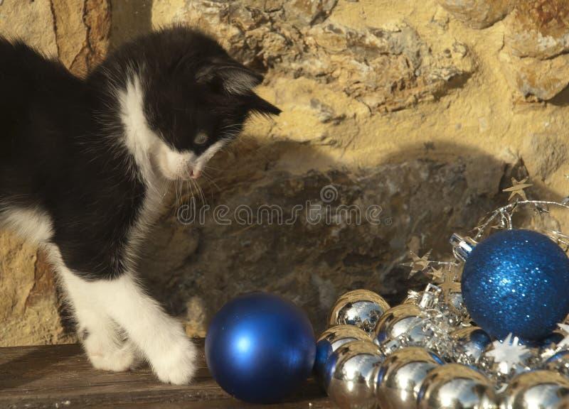 Gato que juega con las decoraciones de la Navidad fotografía de archivo libre de regalías