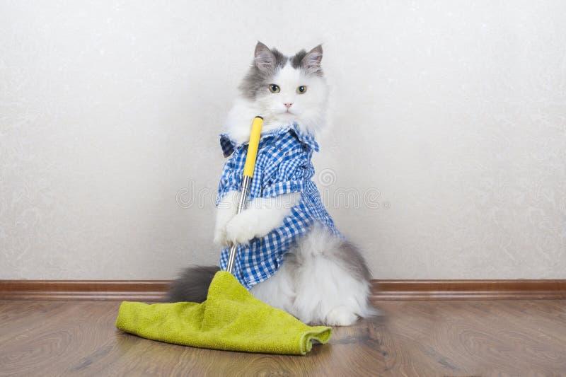 Gato que lava el piso en el apartamento imagenes de archivo