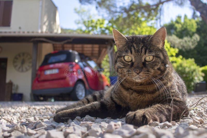 Gato que le acoge con satisfacción en su casa fotografía de archivo