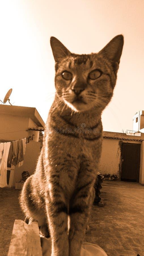 Gato que levanta para uma imagem imagem de stock