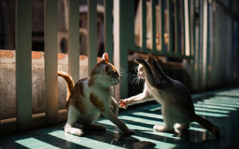 Gato que lucha imagen de archivo libre de regalías