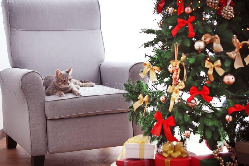 Gato que miente en butaca cerca de la Navidad hermosa foto de archivo libre de regalías