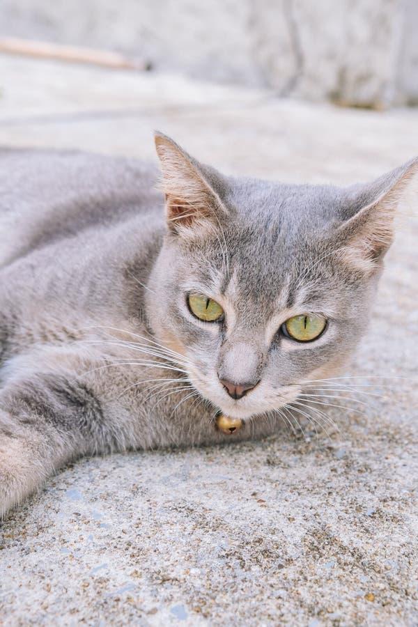Gato que miente en el piso del cemento, foco selectivo fotografía de archivo libre de regalías