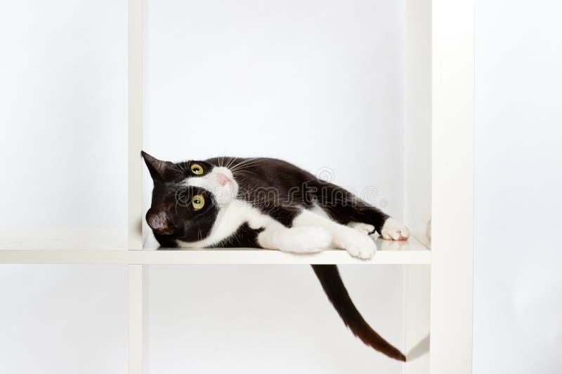 Gato que miente en estante imagen de archivo libre de regalías