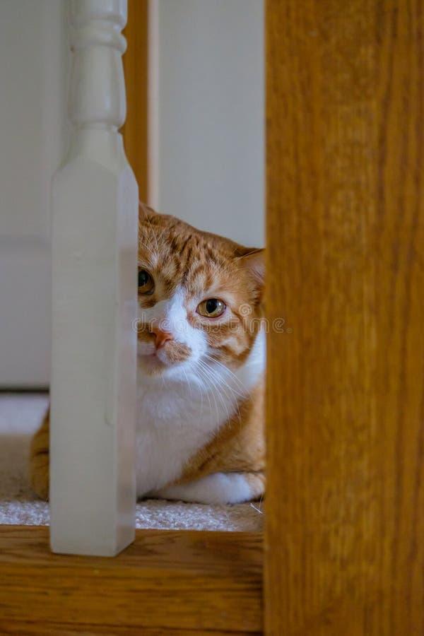 Gato que mira de la verja de la escalera imagenes de archivo
