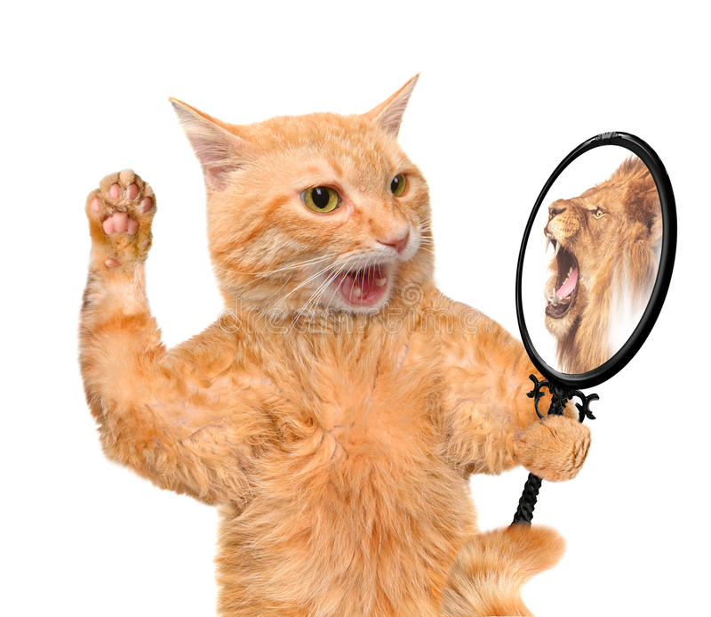 Gato que mira en el espejo y que ve una reflexión de un león foto de archivo libre de regalías