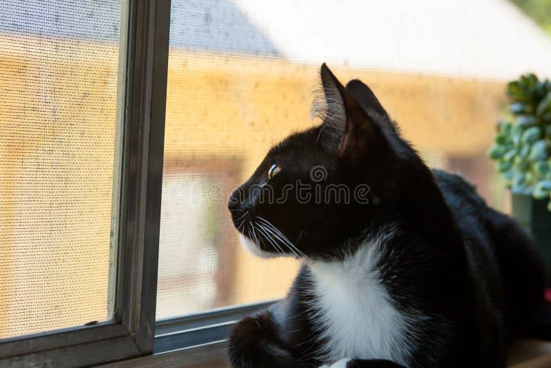 Gato que mira hacia fuera la ventana ascendente fotografía de archivo