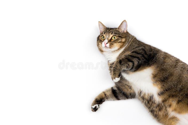 Gato que mira para arriba fotos de archivo libres de regalías