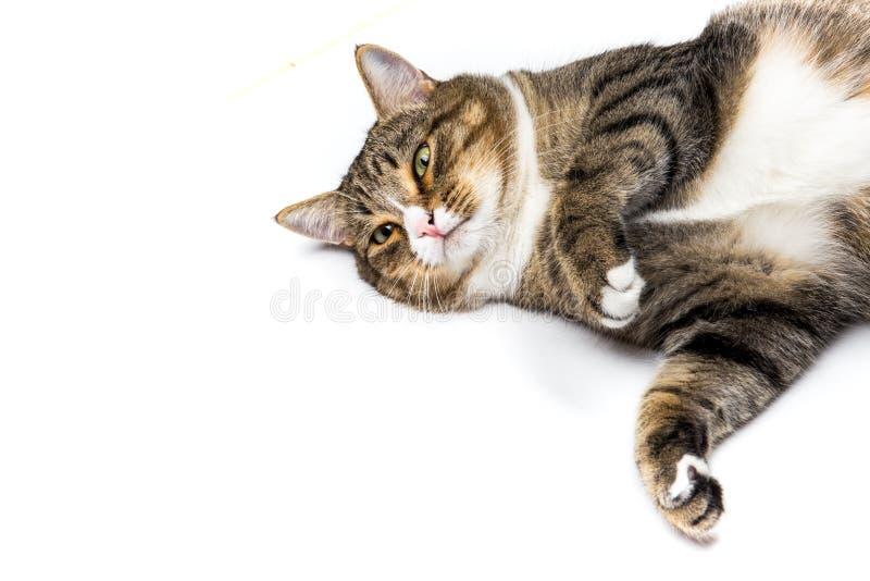 Gato que mira para arriba foto de archivo libre de regalías