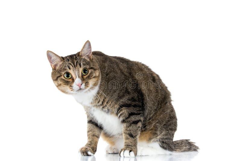 Gato que mira para arriba imagen de archivo libre de regalías