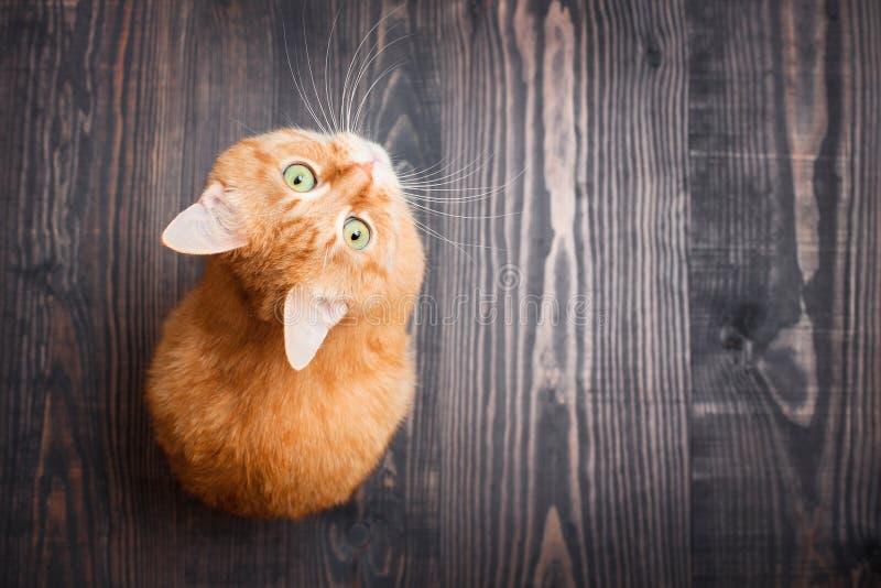 Gato que mira que se incorpora en el fondo de madera imagenes de archivo