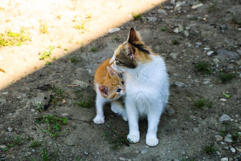 Gato que nutre seu gatinho pequeno fotografia de stock