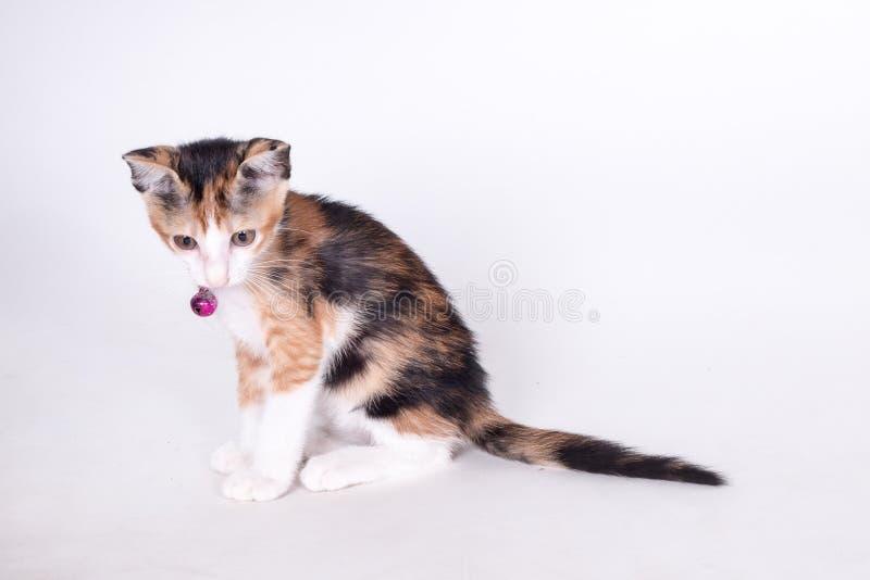 Gato que olha acima fotografia de stock royalty free
