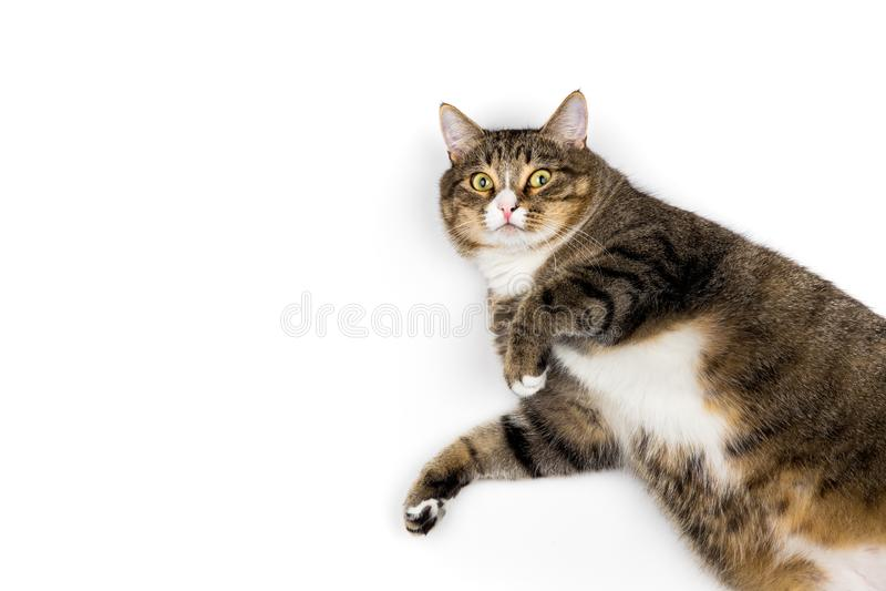 Gato que olha acima foto de stock royalty free