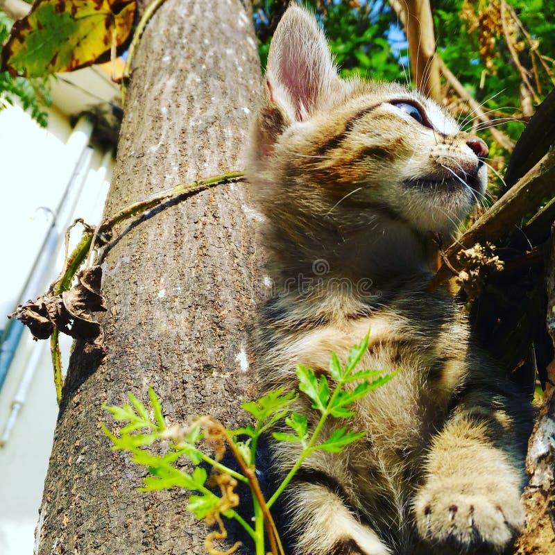 Gato que olha alguém liker estando foto de stock