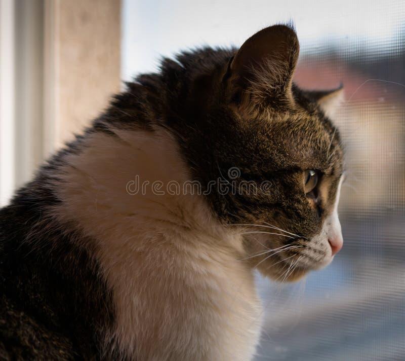 Gato que olha através da janela foto de stock