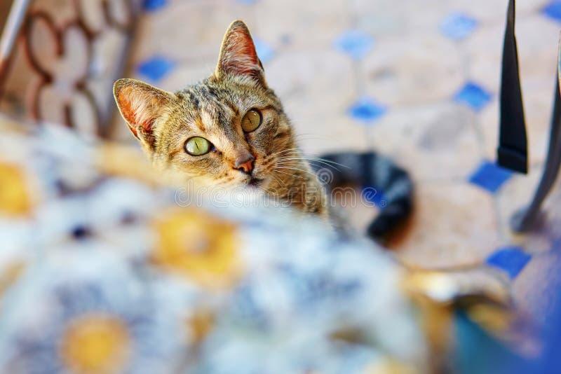 Gato que olha de debaixo da tabela imagem de stock royalty free