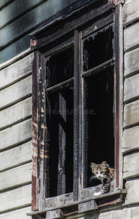 Gato que olha fora da janela de uma casa abandonada no Patagonia fotos de stock