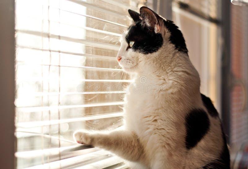 Gato que olha a janela fotos de stock royalty free