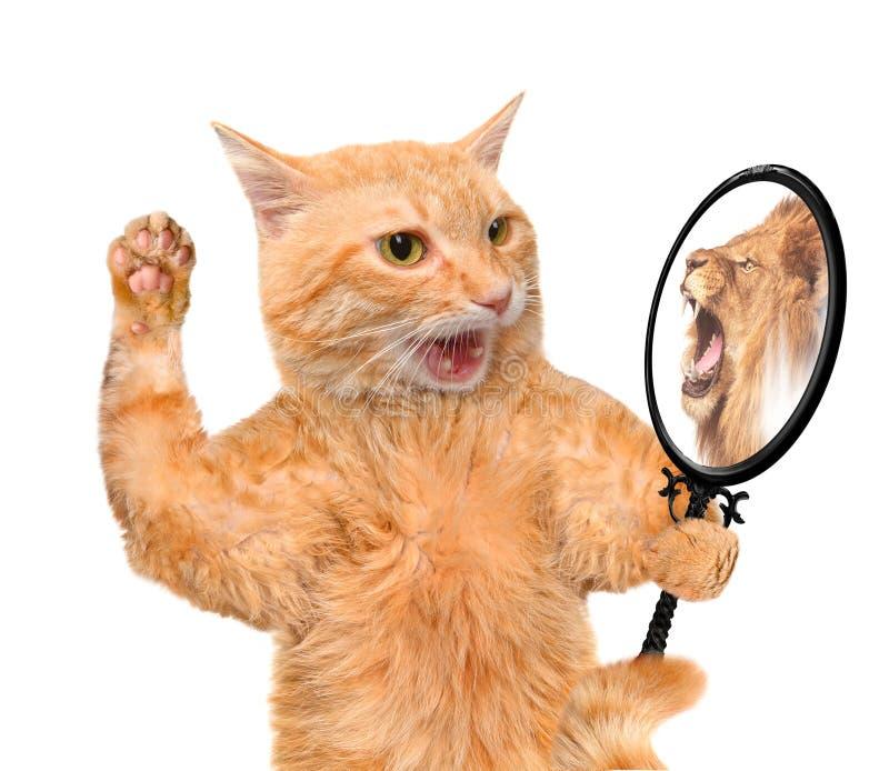 Gato que olha no espelho e que vê uma reflexão de um leão