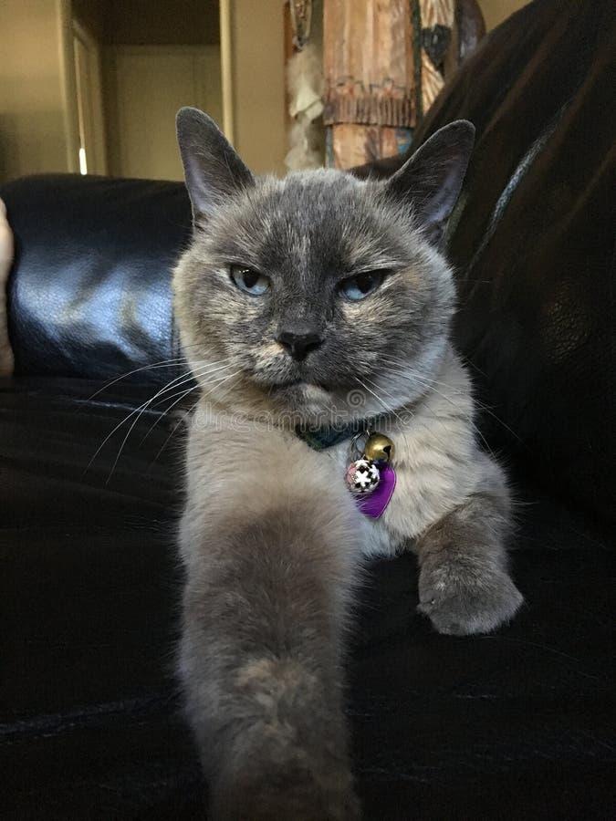Gato que olha o fotos de stock