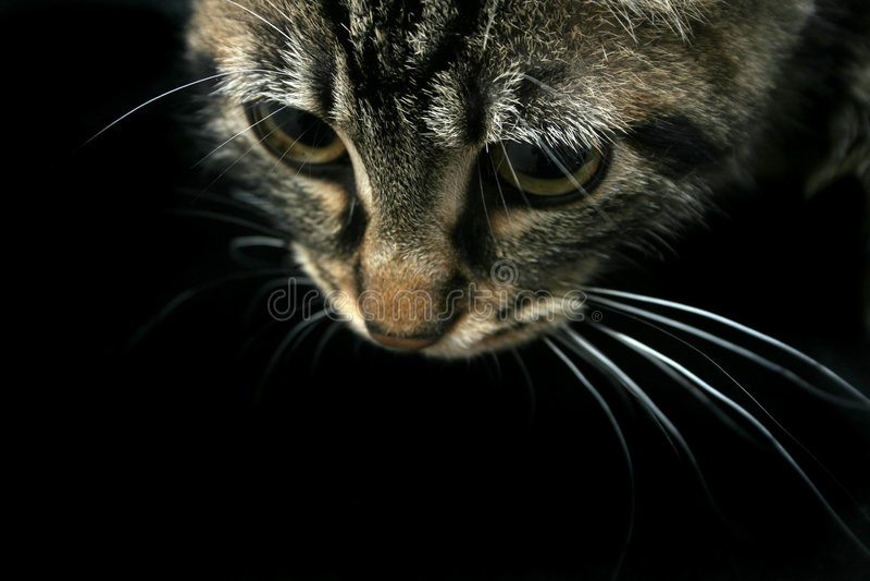 Gato que olha para baixo imagem de stock royalty free