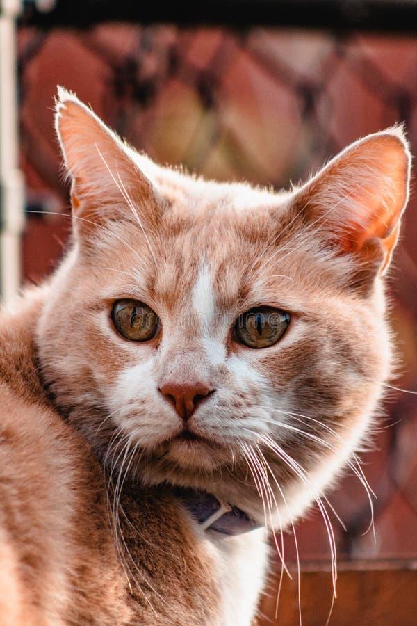 Gato que olha para fora no por do sol imagens de stock