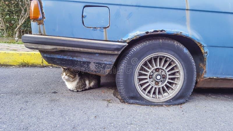 Gato que olha reto, parte dianteira da roda fotos de stock royalty free