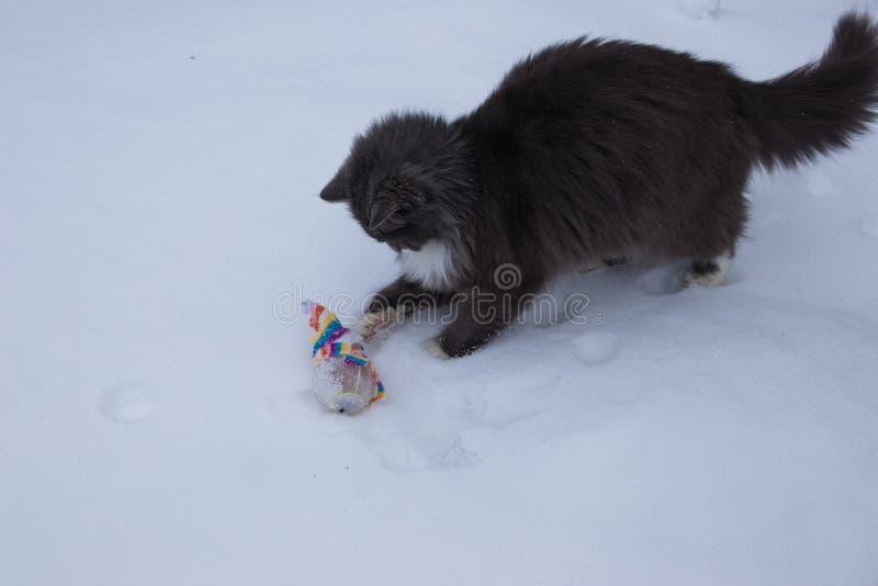 Gato que palying com o brinquedo na neve imagem de stock royalty free