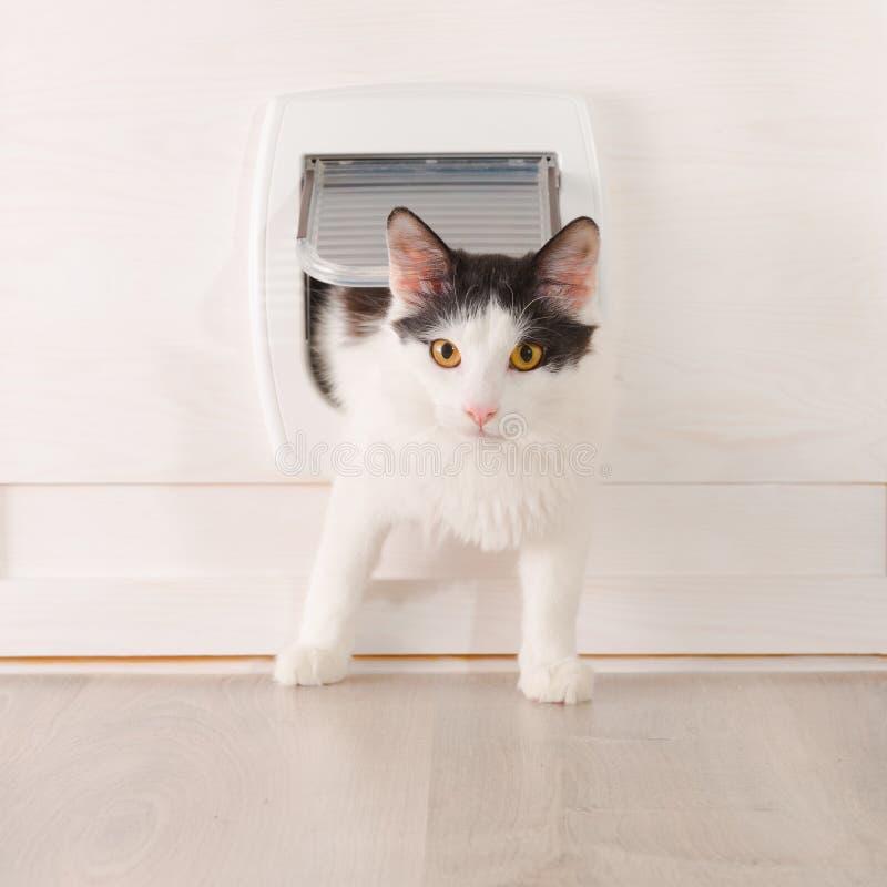 Gato que pasa a través de la puerta de gato imagenes de archivo