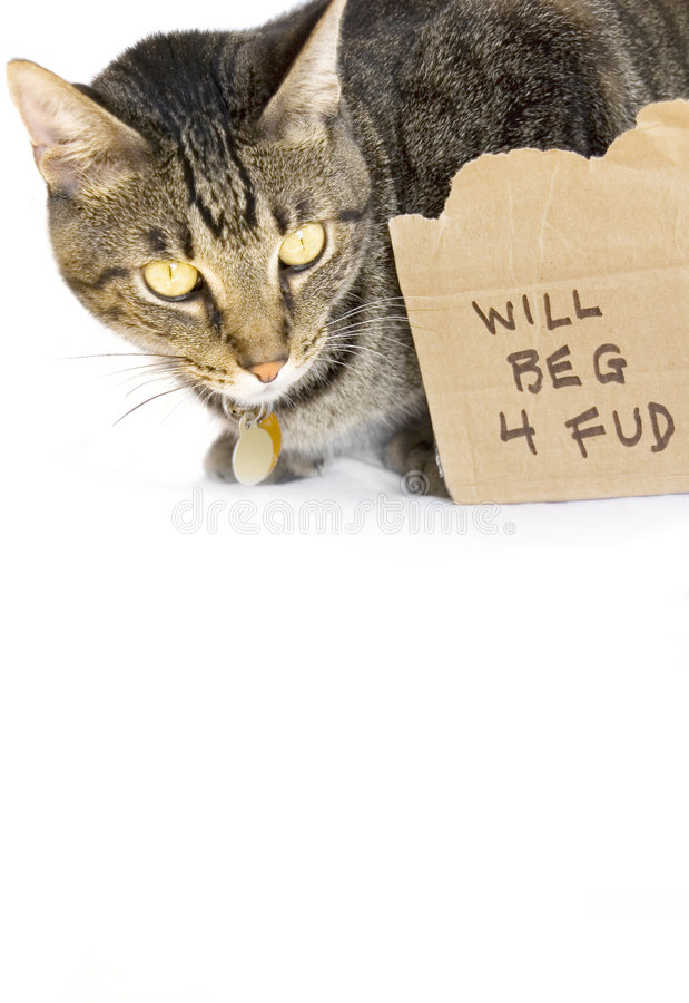 Gato que pide el alimento