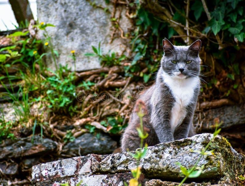 Gato que presenta en una piedra que mira desafiante la cámara fotografía de archivo