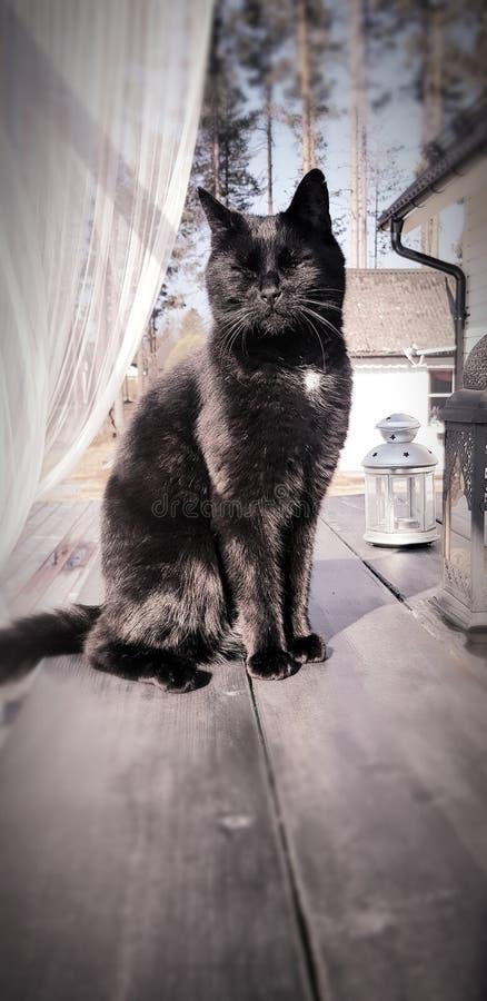 Gato que presenta en una tabla de madera fotografía de archivo