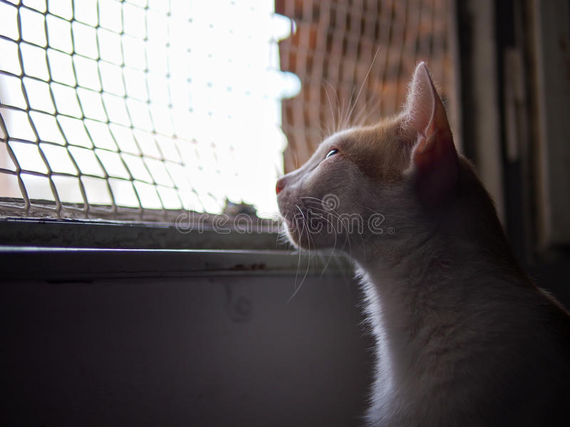 Gato que procura a liberdade imagem de stock royalty free