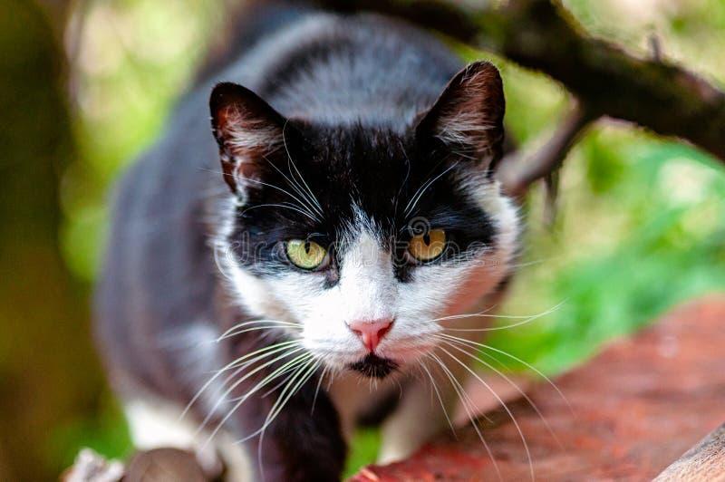 Gato que recorre hacia cámara imágenes de archivo libres de regalías