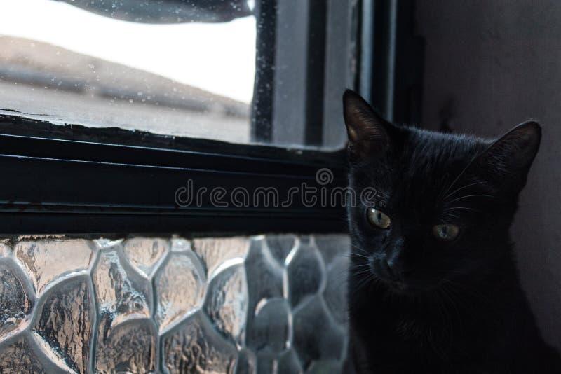Gato que reflexiona además de la ventana fotografía de archivo libre de regalías