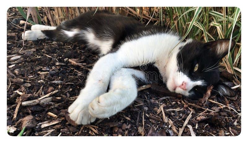 Gato que relaxa fotografia de stock royalty free