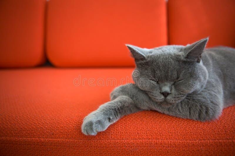 Gato que relaxa no sofá. imagens de stock royalty free