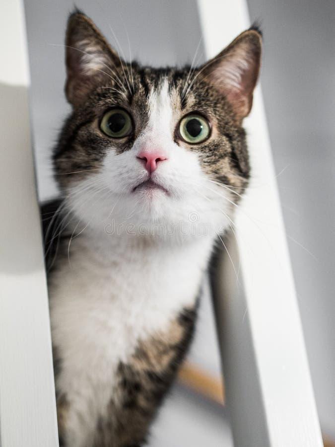 Gato que repica das escadas fotos de stock
