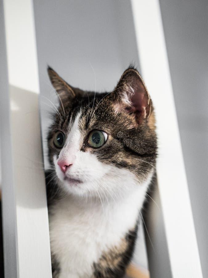 Gato que repica das escadas imagens de stock