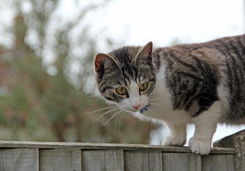 Gato que ronda en la cerca fotografía de archivo