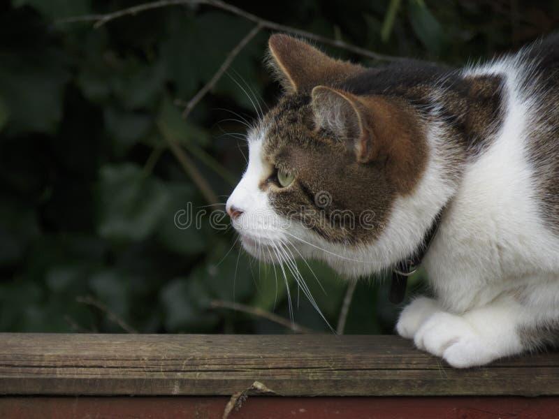 Gato que se agacha foto de archivo libre de regalías