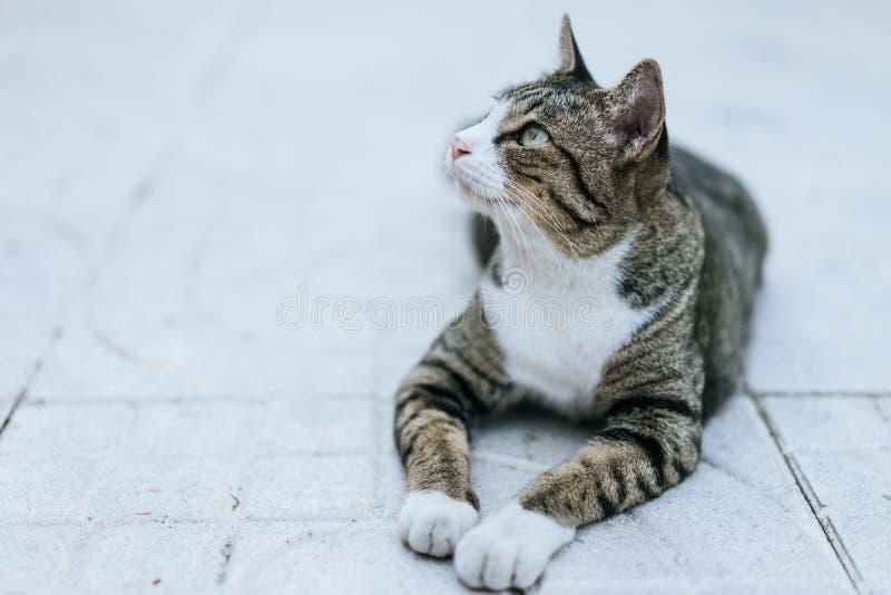 Gato que se agacha en el campo de la acera imagenes de archivo