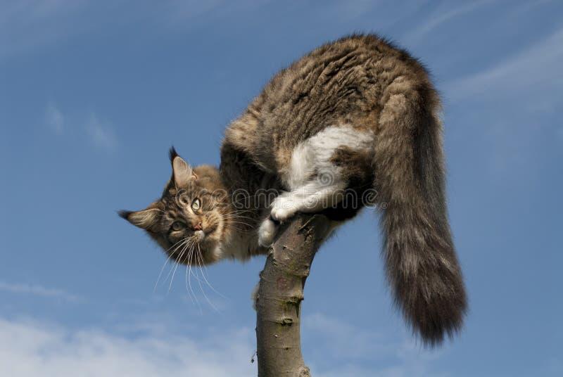 Gato que se coloca en la ramificación foto de archivo libre de regalías