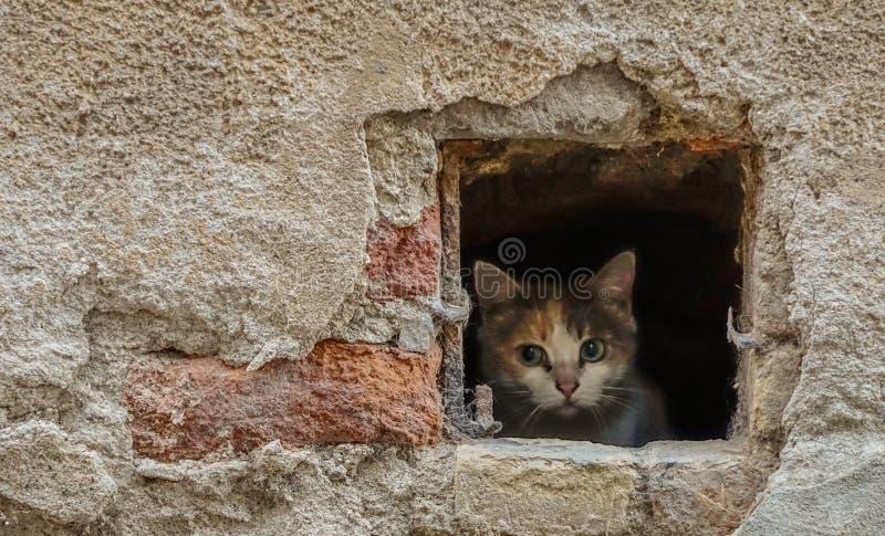 Gato que se inclina fuera de un agujero imagen de archivo libre de regalías