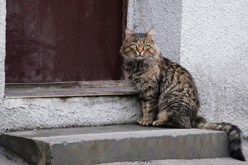 Gato que se sienta imagen de archivo
