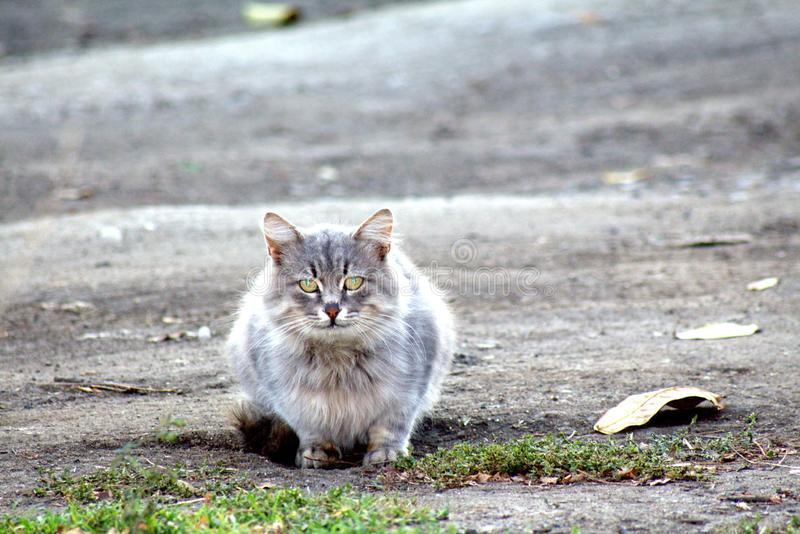 gato que se sienta en el camino roto y derramado con las hojas secas fotografía de archivo